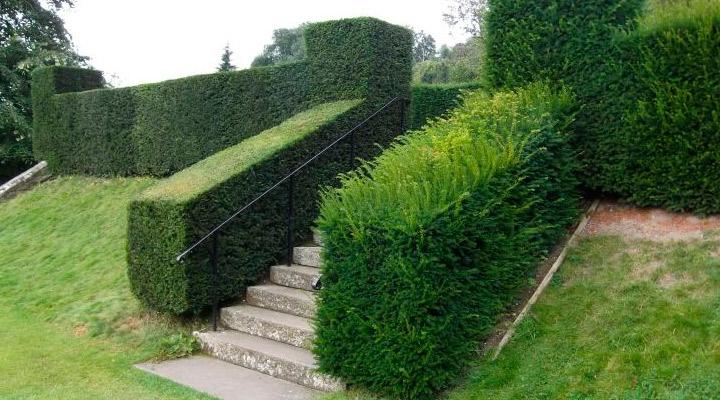 Пример живой изгороди на лестнице