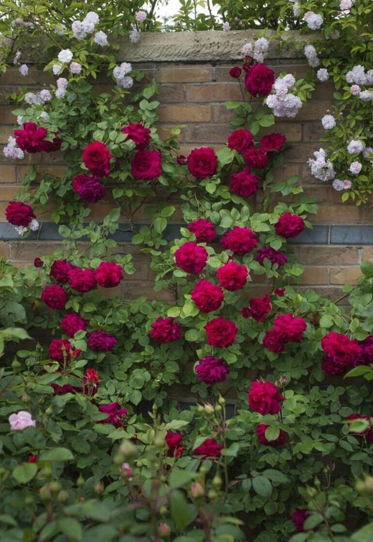Садовый дизайн и розы