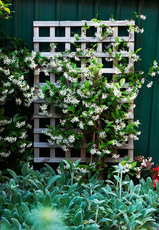 Идеи для садового дизайна