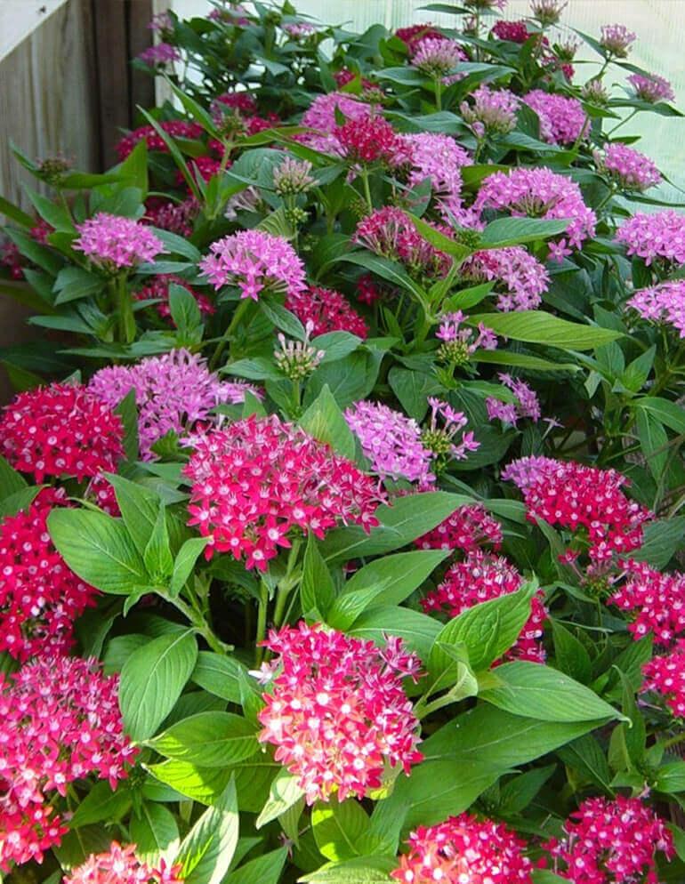 Ваш цветущий сад