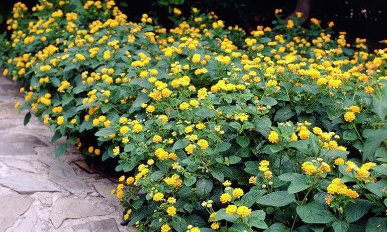 Садовый дизайн желтые цветочки