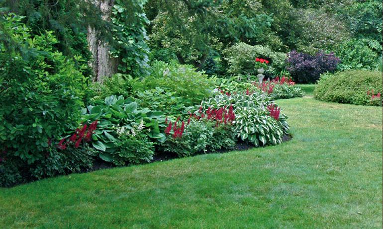 Хоста и красный Астильбе - пример повторяющейся растительной темы в этом саду