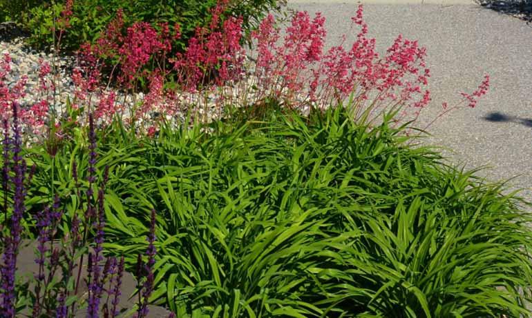 группы растений в ландшафтном дизайне