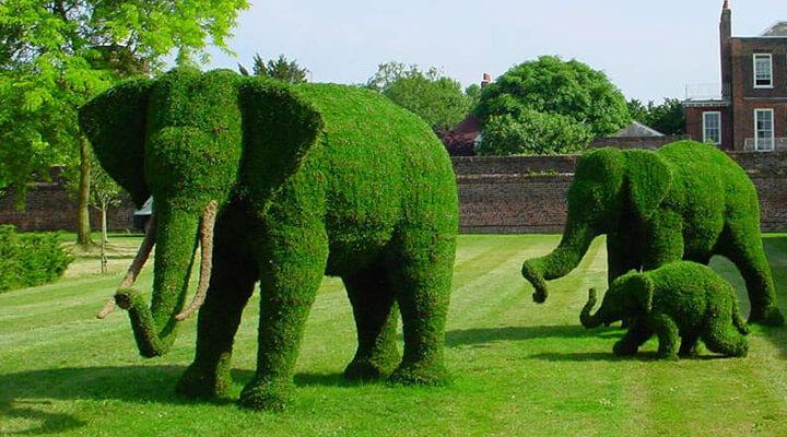 Декоративный куст в виде слона