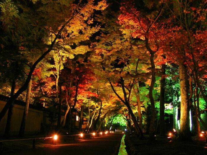Дорожка и деревья освещаются и придают саду романтический характер