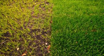 Солнечное рулонный газон